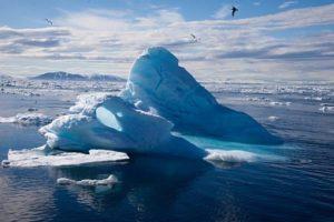 В Арктике введен мораторий на вылов рыбы
