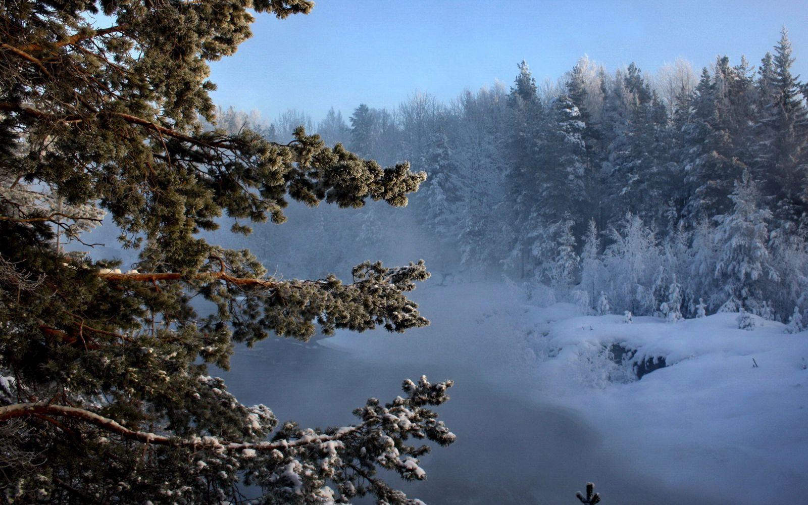 На землях Нижневартовского лесничества в Югре обустроят полигон твердых бытовых отходов.