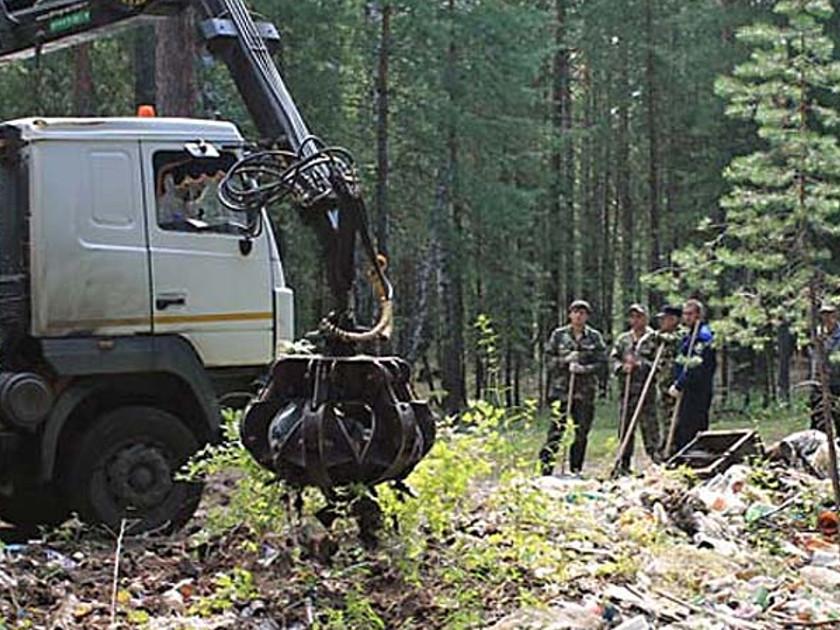 лес свалка мусора