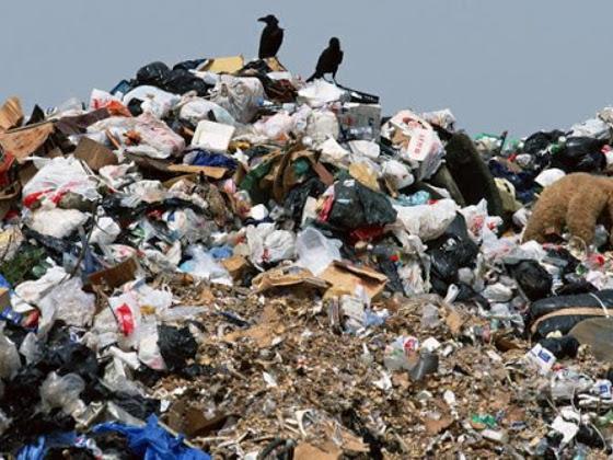 Инвесторы из Подмосковья готовы бесплатно собирать и утилизировать мусор в Севастополе