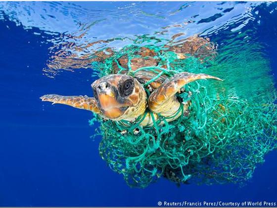 черепахи и пластик