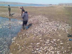 Омск мор рыбы
