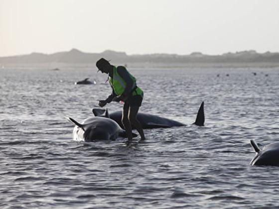 Странное поведение морских животных