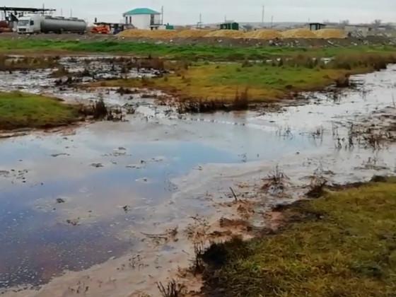 Таманский полуостров на грани экологической катастрофы
