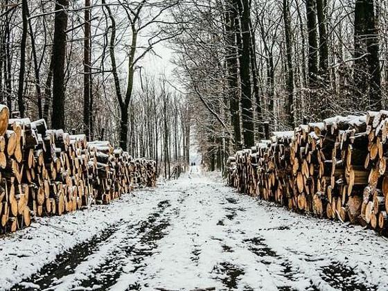Вишневский попросил Беглова не допустить вырубки 10 гектаров леса