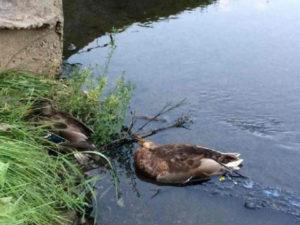 Росприроднадзор оценил ущерб от загрязнения реки аэропортом Петербурга в 162 млн рублей