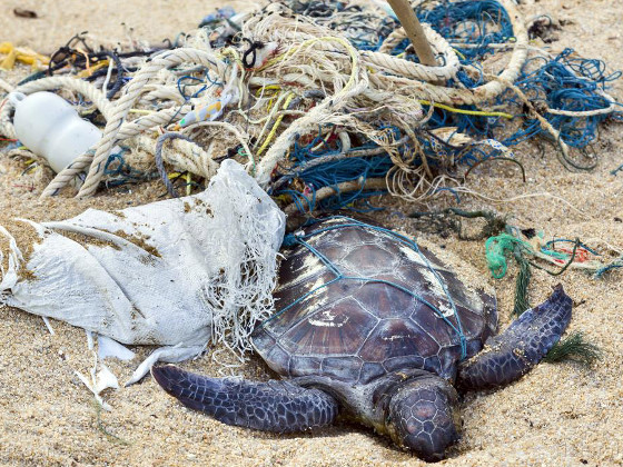 Новое исследование показывает, что 100% морских черепах имеют пластик в животе