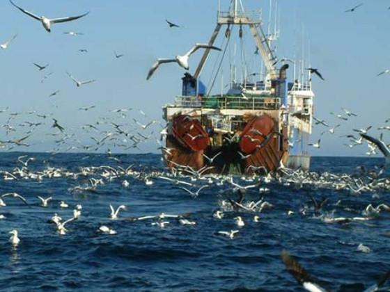 В рыбе из Баренцева моря нашли мышьяк и свинец