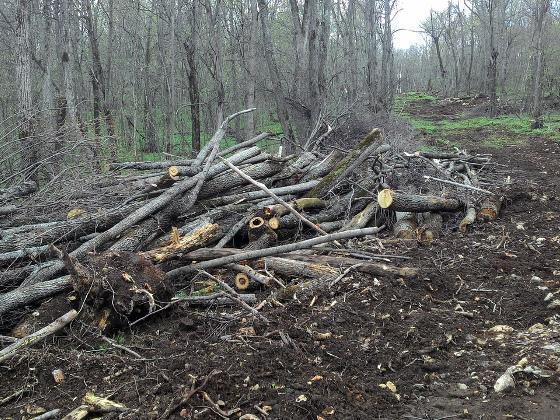 Пчеловоды Башкирии просят прекратить уничтожение леса в угоду горнодобывающей компании