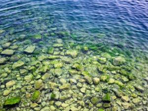 Массовая гибель рыбы на севере Байкала могла произойти из-за спирогиры