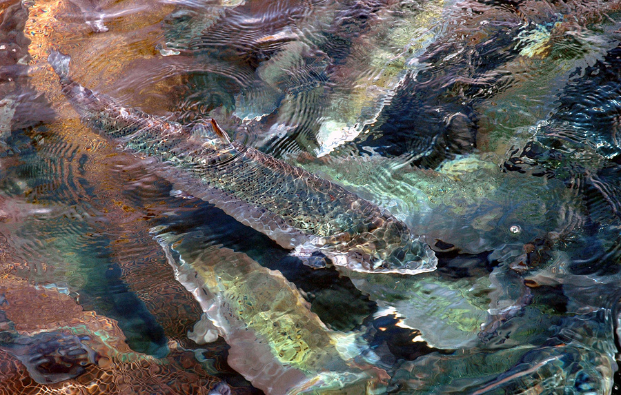 Река с популяцией семги под Мурманском будет очищена в рамках нацпроекта