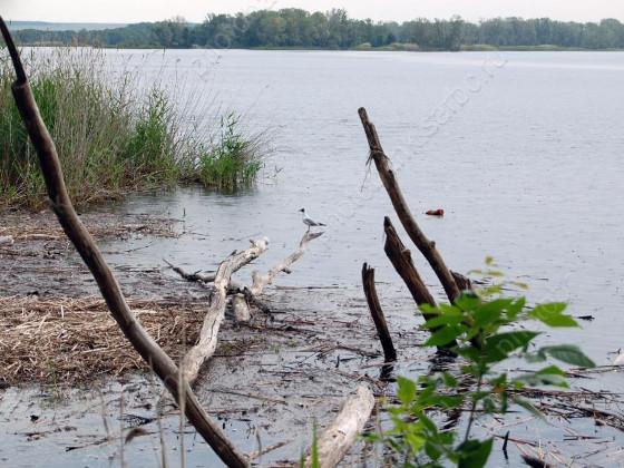 Вода Саратовского водохранилища названа самой грязной за 10 лет Подробнее на сайте Https://news.sarbc.ru/main/2019/09/04/237177.html?utm_source=yxnews&utm_medium=desktop&utm_referrer=https%3A%2F%2Fyandex.ru%2Fnews