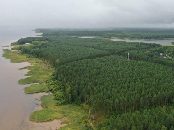 Землю под строительство ЦБК под Череповцом отдадут в аренду без торгов