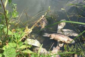 Роспотребнадзор сообщил, что загрязнение реки в Башкирии не связано с утечкой с завода