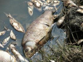 Апелляция подтвердила взыскание 3,8 млрд рублей за загрязнение воды
