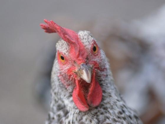 Птицефабрика травит все живое вокруг