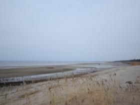2 февраля отмечается Всемирный день водно-болотных угодий. Главная тема 2020 года – Биоразнообразие.