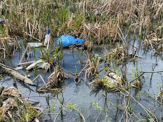 В Красносельском районе Петербурга Росприроднадзор выявил нарушения природоохранного законодательства