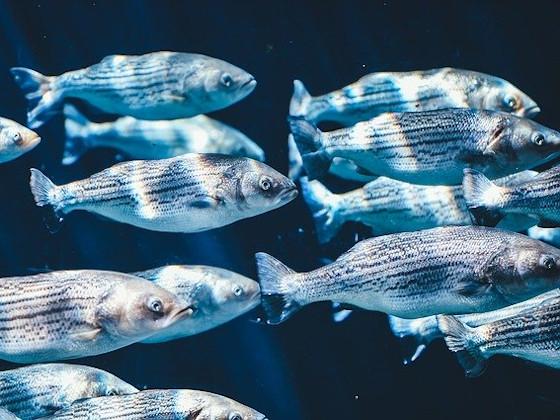 Экологический центр АЛРОСА продолжает масштабную работу по зарыблению водоемов Якутии