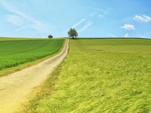 Захоронение химических отходов на земле сельскохозяйственного назначения