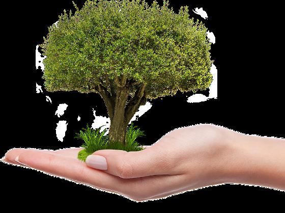 Илья Торосов: в РФ сделан первый шаг к системному развитию зеленого финансирования