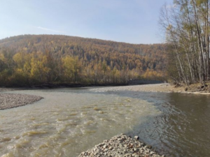 Семь рек пострадали от работы золотодобытчиков в Амурской области
