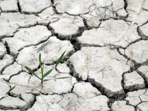 Абрамченко назвала приоритеты кабмина в области экологии и климата