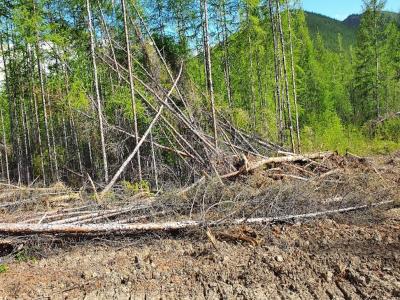 Геологоразведчики незаконно вырубили 67 кубометров леса в Якутии