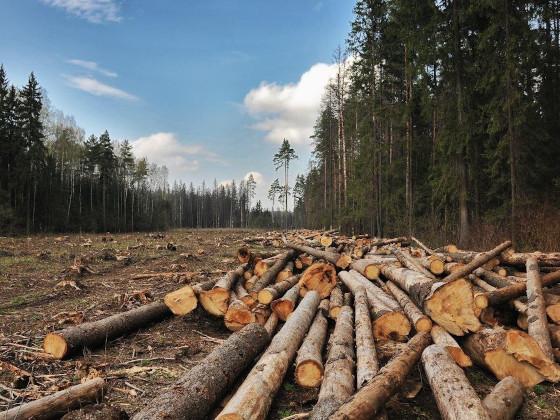 26 кубометров леса незаконно вырубили сотрудники «Оротуканской горной компании»